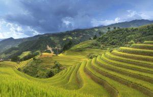 Отдохнуть весной плантации Вьетнам